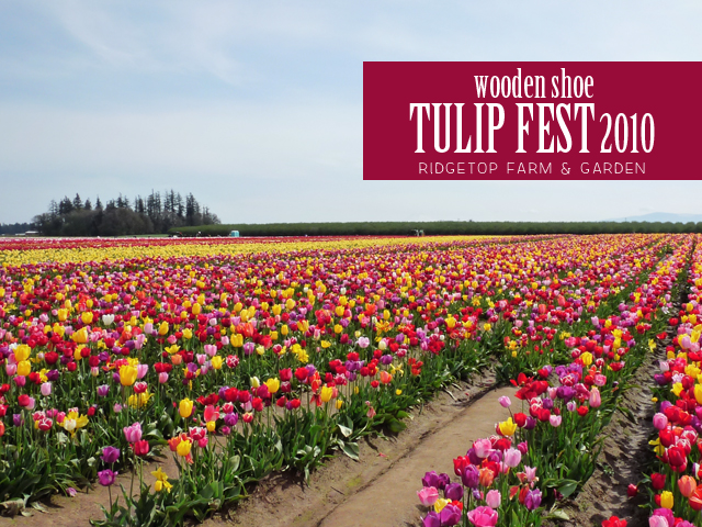 Ridgetop Farm and Garden | Wooden Shoe Tulip Fest 2010