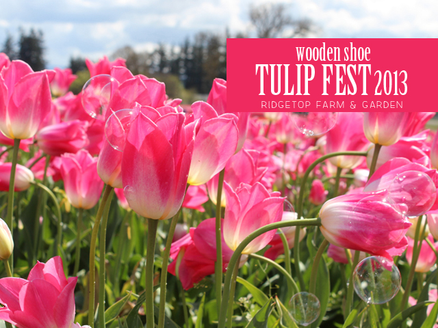 Ridgetop Farm and Garden | Wooden Shoe Tulip Fest 2013