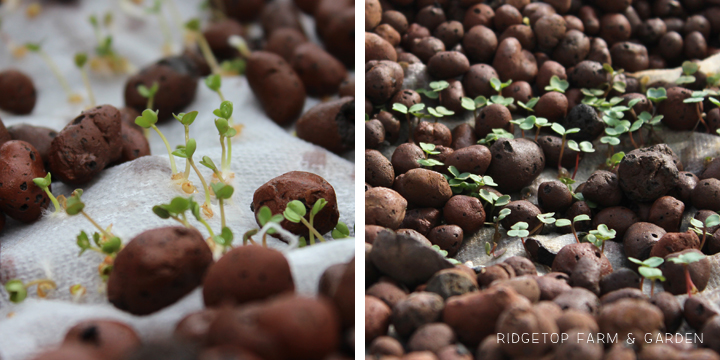 Ridgetop Farm & Garden | Aquaponics Update April 2014 | Starting Lettuce & Cabbage Seed