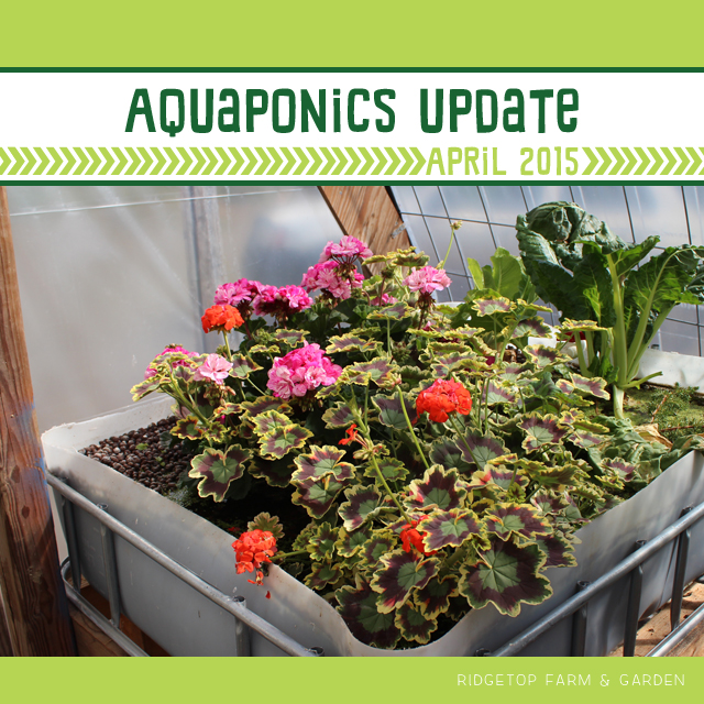Aquaponics Update April2015 title