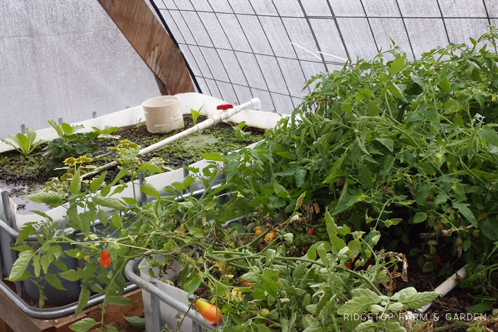 Aquaponics Update Jan2015 2