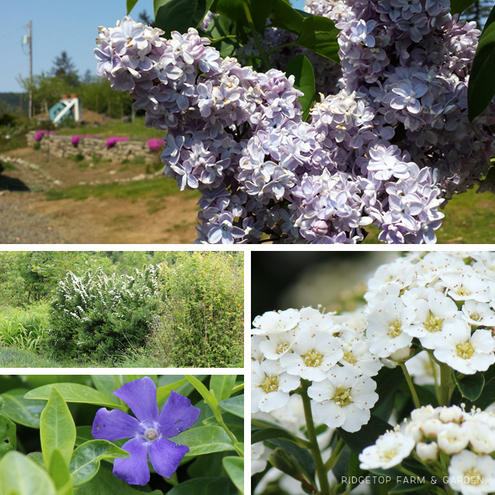 May 2015 Bloom Day backyard