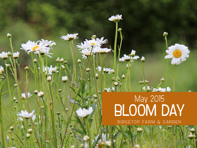 May 2015 Bloom Day title