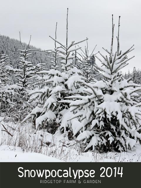 Snowpocalypse title