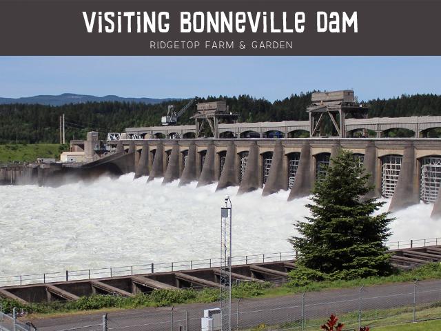 Ridgetop Farm & Garden | Bonneville Dam
