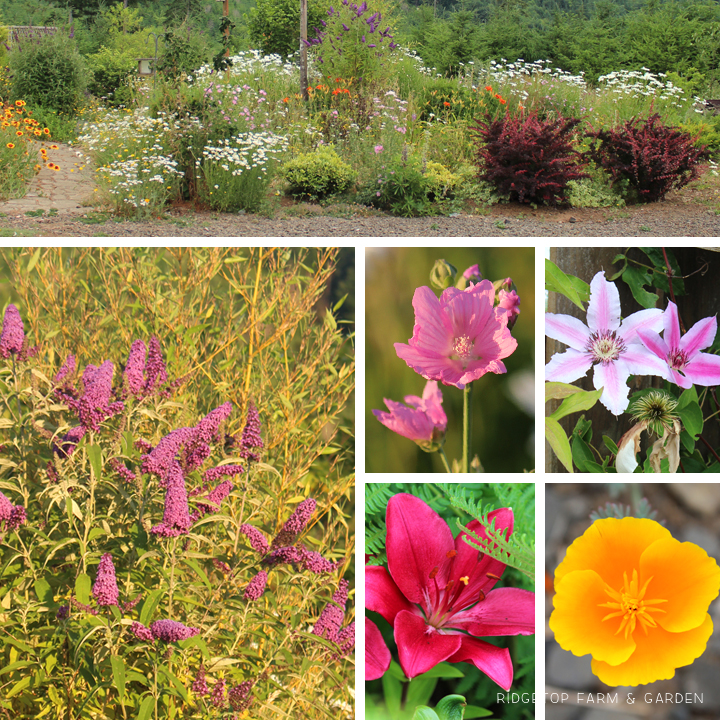 Ridgetop Farm & Garden | Bloom Day | July 2015 | Bird Village