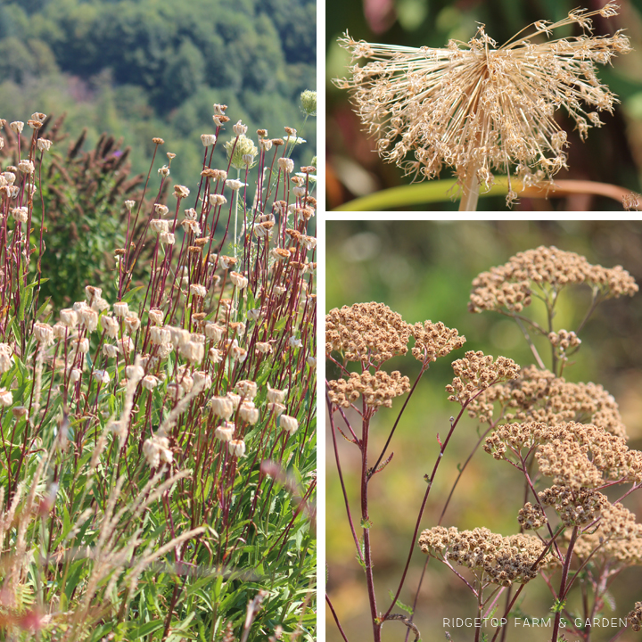 Ridgetop Farm & Garden | Bloom Day | August 2015