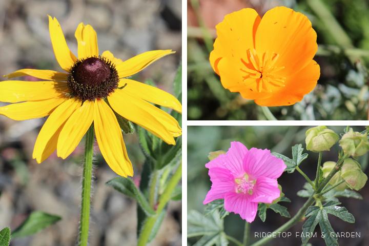 BloomDay-Sept2015_1