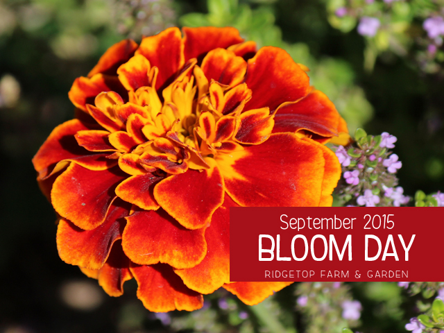 BloomDay-Sept2015_title