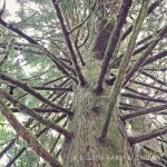 31 Days in Oregon: Magness Memorial Tree Farm
