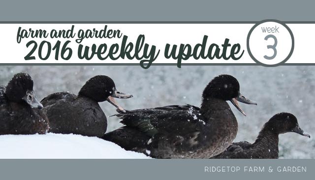 Ridgetop Farm and Garden | Weekly Update | Week 3