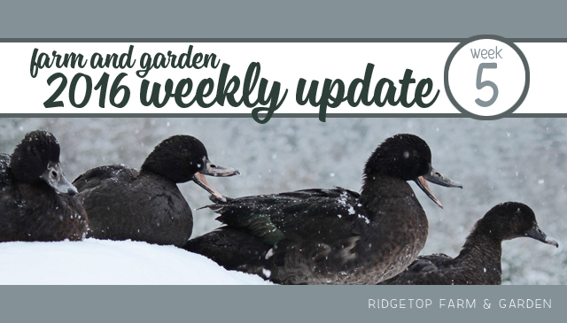 Ridgetop Farm and Garden   2016 Weekly Update