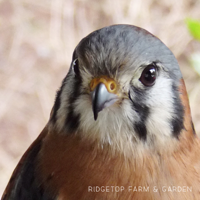 31 Days in Oregon: Audubon Society of Portland