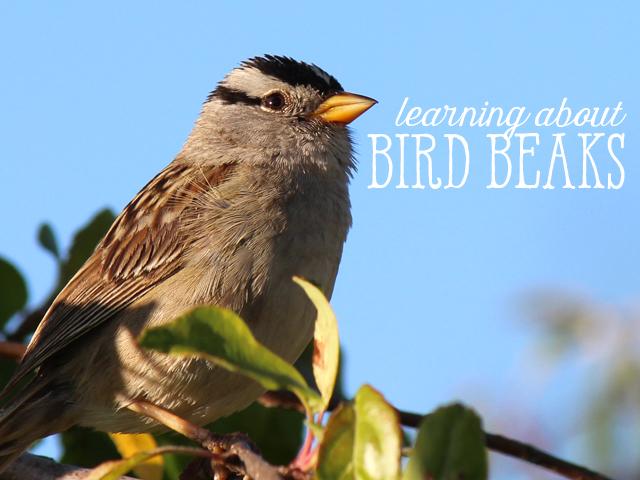 Ridgetop Farm and Garden | Home School | Animal Science | Bird Beaks