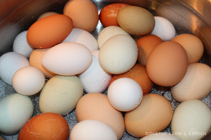 Ridgetop Farm and Garden | Hard Boiling Fresh Eggs