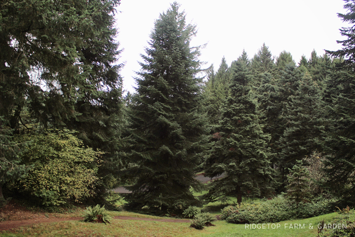 Ridgetop Farm and Garden | 31 Days in Oregon | Hoyt Arboretum