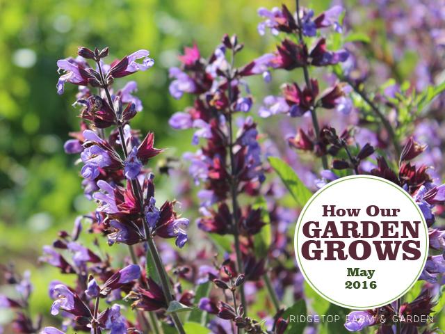 Ridgetop Farm and Garden | Garden Grows | May 2016