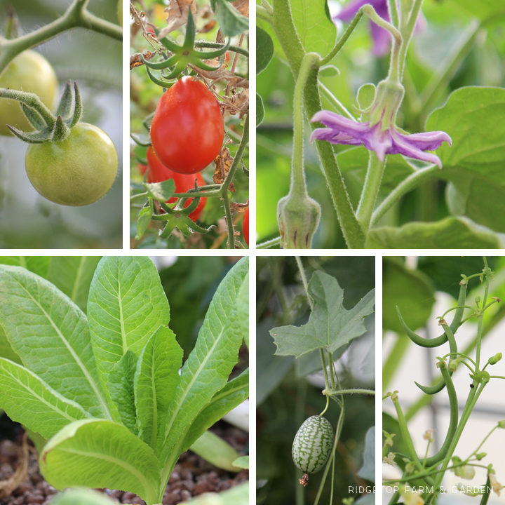 Ridgetop Farm and Garden | How our Garden Grows | June 2016