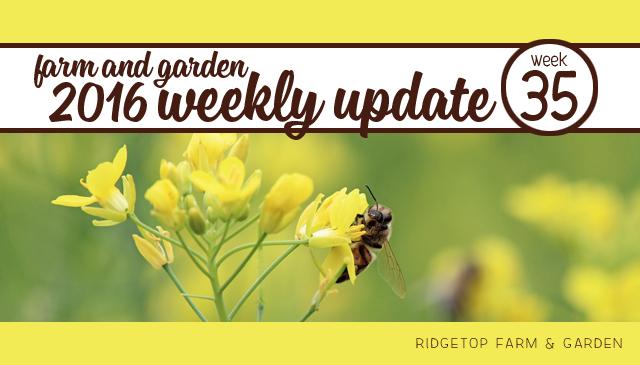 Ridgetop Farm and Garden | 2016 Update | Week 35