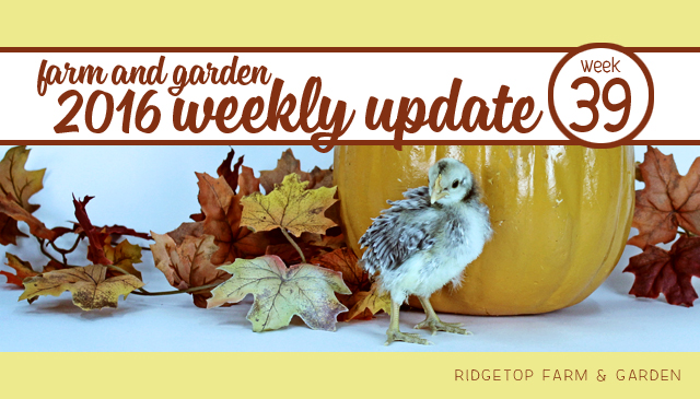 Ridgetop Farm and Garden | 2016 Update | Week 39