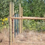 Our Goat Fence
