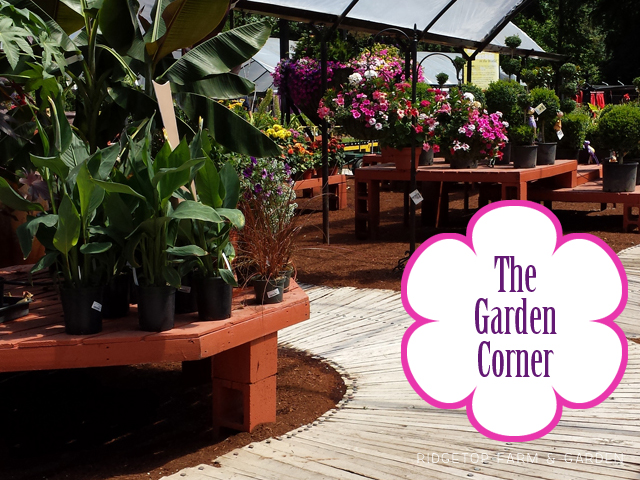 Ridgetop Farm and Garden | Nursery | The Garden Corner