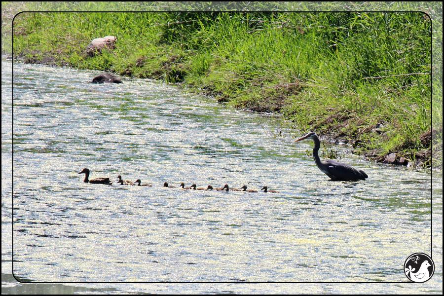 Ridgetop Farm and Garden | Birds of 2013 | Week 21 |