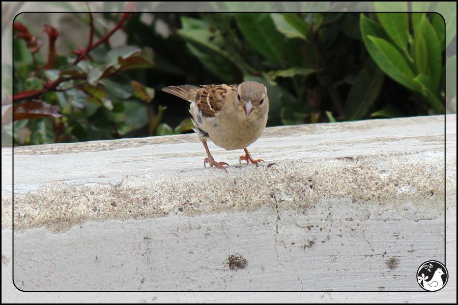 Ridgetop Farm and Garden | Birds of 2013 | Week 24 |