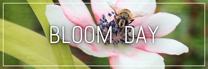 Ridgetop Farm and Garden | Flower Gardens | Bloom Day