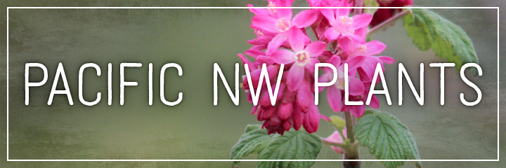 Ridgetop Farm and Garden | Flower Gardens | Pacific NW Plants