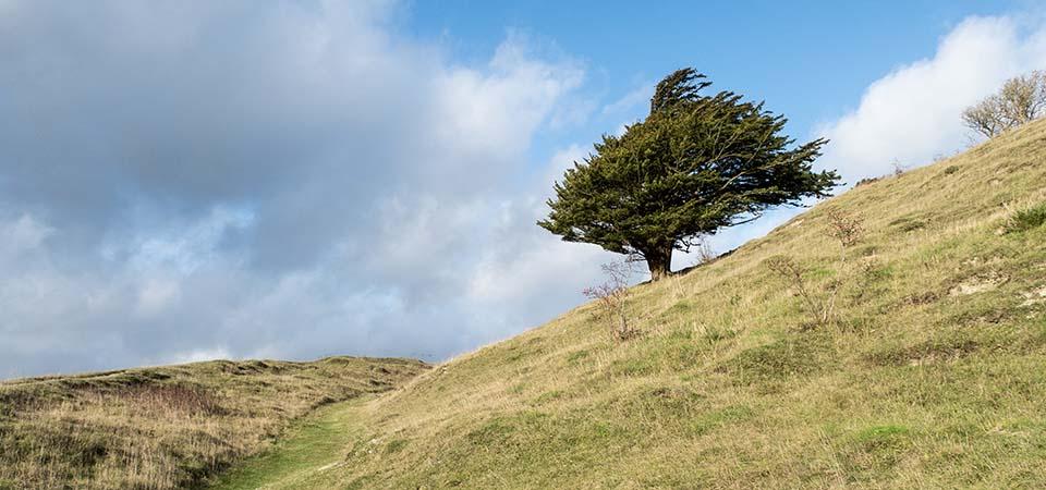 Lonely-tree-960x450
