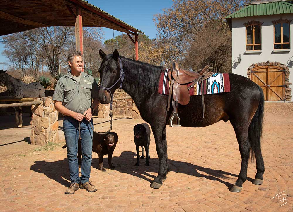 McClellan saddle and horse