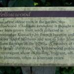Yellowwood Placard