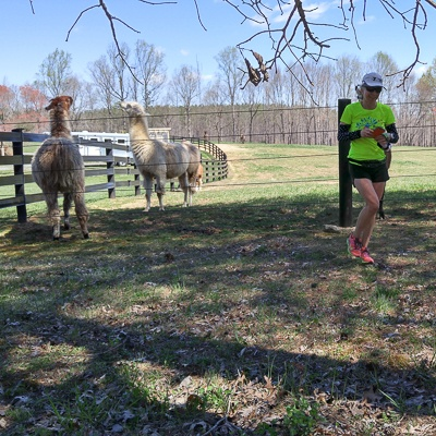 _runs-with-alpacas.square.400-49