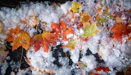 OCTOBER SNOW 8 JPG t2500