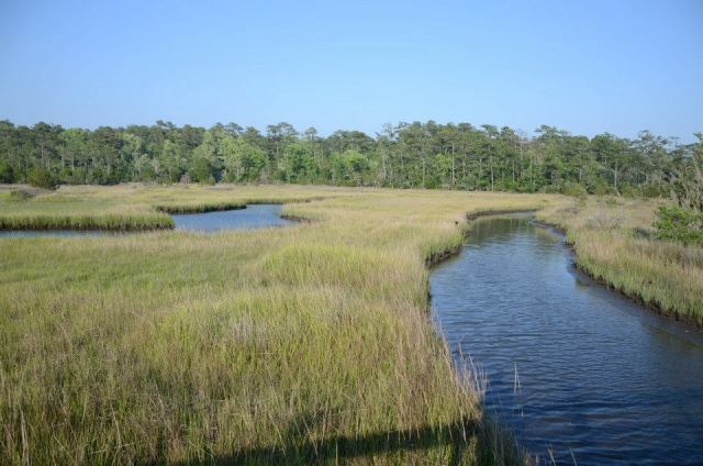 Croatan National Forest, North Carolina
