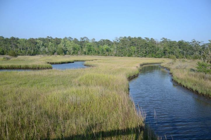Croatan National Forest, North Carolina