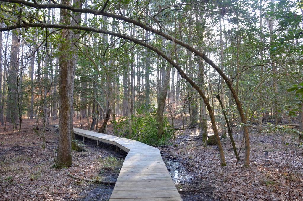 The Coastal Plain Trail at White Oak Lake State Park in South Arkansas is a treasure. It showcase the unique terrain of the Gulf Coastal Plain.