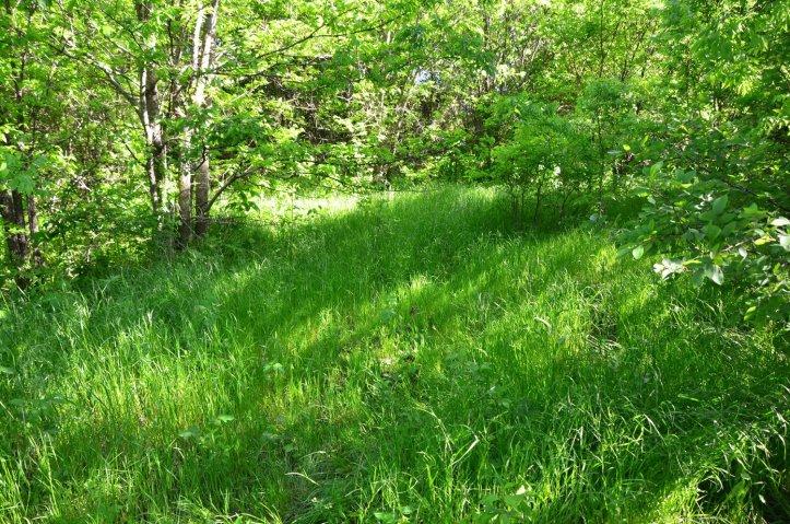 Tall green grass is shown along the Kachina Prairie