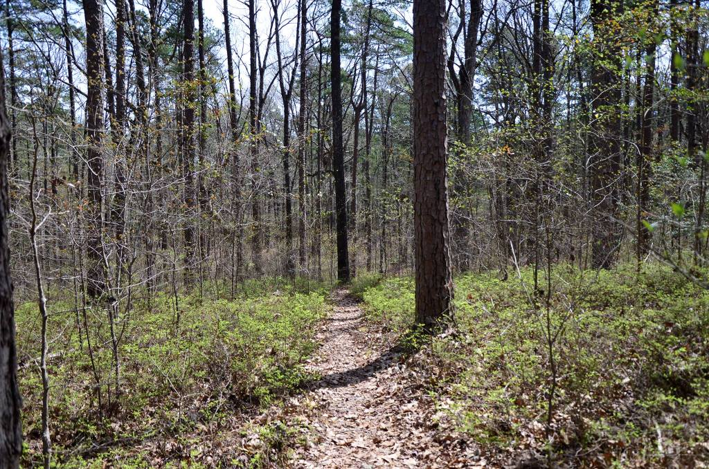 The open woods are shown on the spur trail between Lake Sylvia and the Ouachita Trail