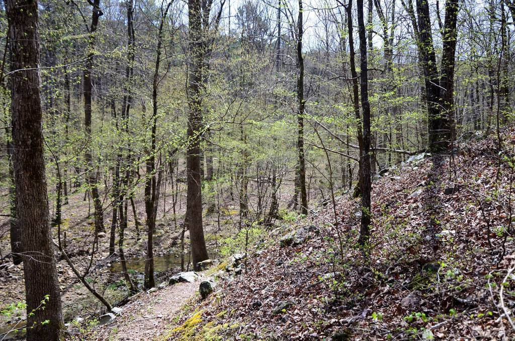 The extended Lake Sylvia Loop is a beautiful hike that showcase all the Ouachita Mountains offers