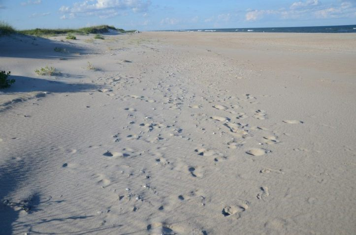 The beach on Cape Lookout National Seashore is shown littered with seashells.