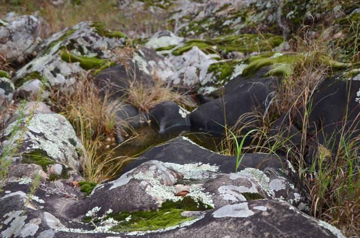 Rocks near a river bank