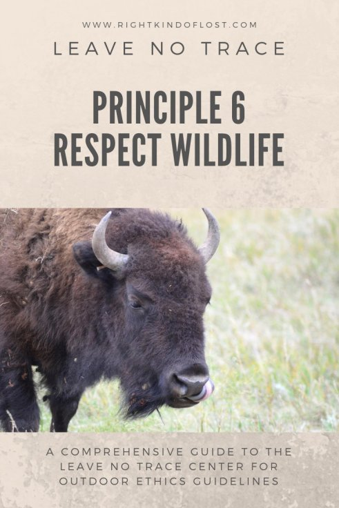 Leave No Trace Principle 6 – Respect Wildlife tells us to share wild spaces with those who live there. Doing this will help keep you and them safe!