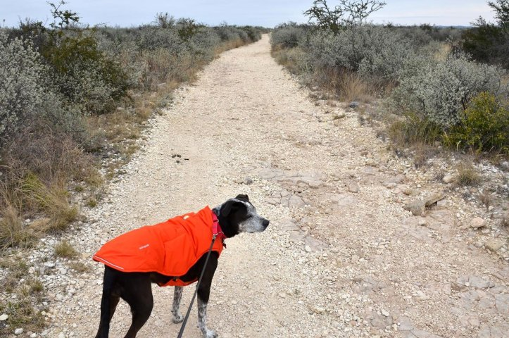 Caddie sports her puffy coat as a piece of the best dog camping gear