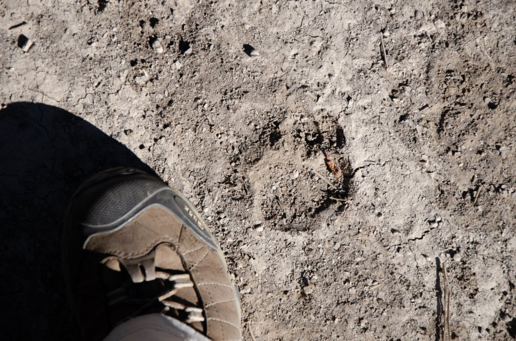 A cougar footprint is shown along the West Rim Trail at Zion National Park