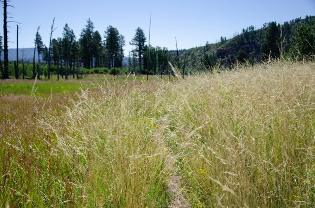 In Potato Hollow the trail takes you through tall grasses