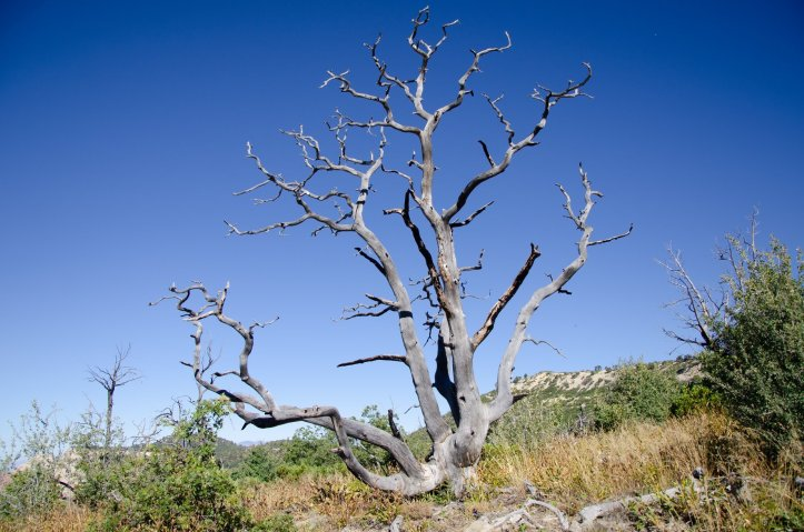 A tree is shown at zion national park