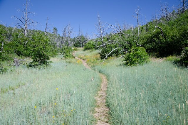 The West Rim trail take you through beautiful meadows