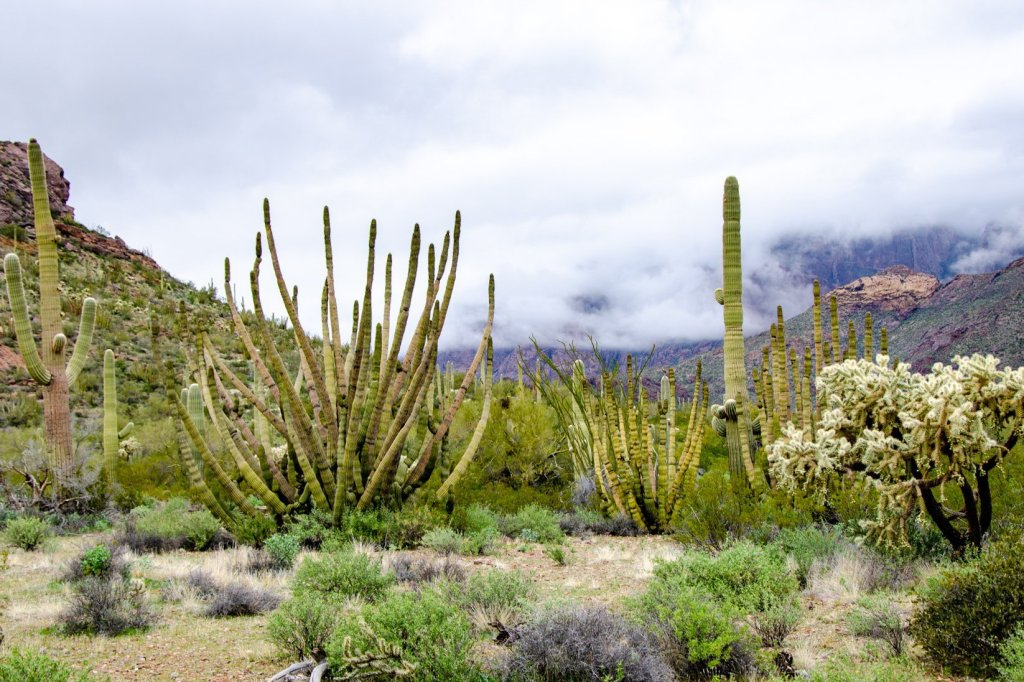Organ Pipe Cactus National Monument is shown